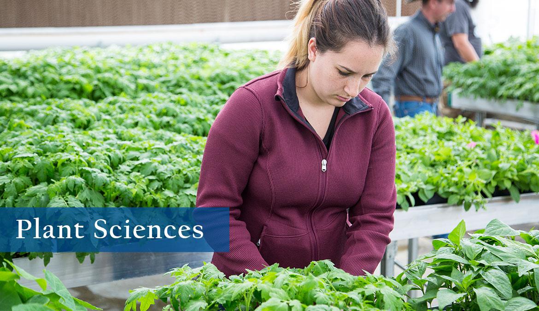 Plant Sciences program at Sheridan College